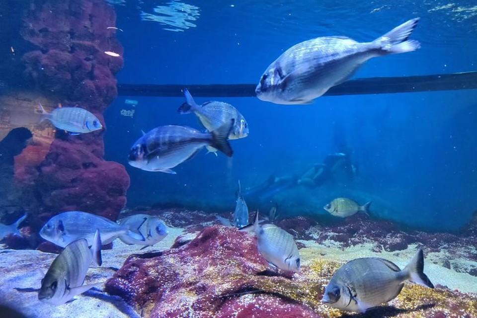Liefst 1.600 soorten vallen te bewonderen in het aquarium.