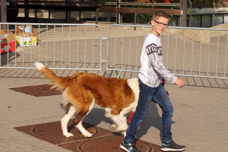 De gemeente organiseert zondag een hondenwandeling voor het goede doel.