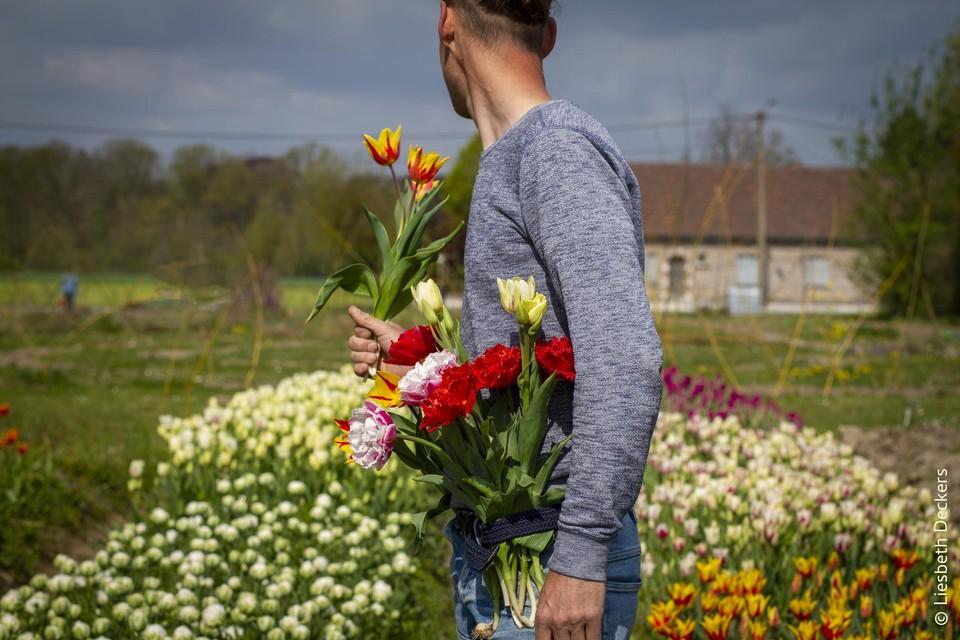 Zelf bloemen plukken bij Bloemencowboy Dimitri in Spalbeek (Hasselt).