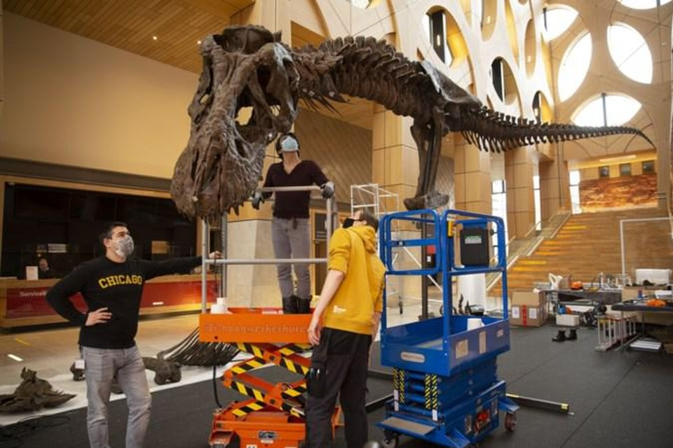 De replica van Trix II was opgebouwd in het Atrium van Naturalis. Rechtsboven Hanneke Jacobs met een deel van de uitgeprinte kaak van het roofdier.