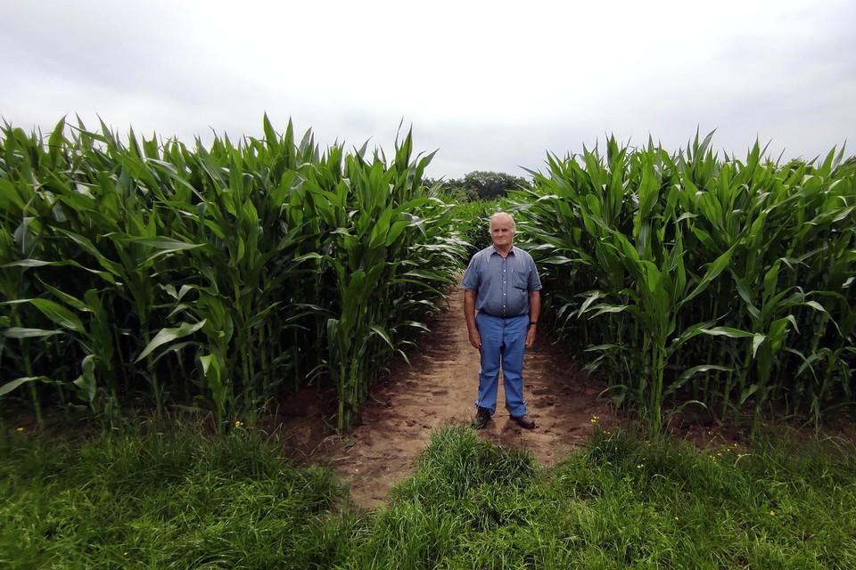 """Op zoek naar een nieuw onderkomen vond de organisatie gehoor bij de landbouwer op rust Jan Gielen (64). """"Anderhalve kilometer aan gangen in mijn maisveld. En ja, ook zelf was ik even de weg kwijt."""""""