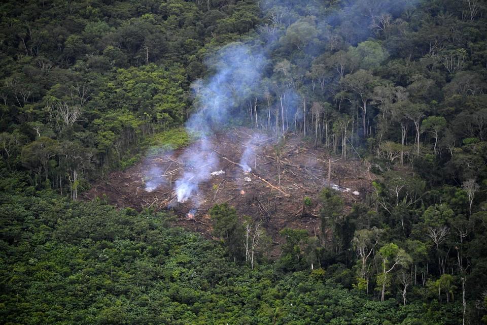 De meeste moorden op milieuactivisten waren gerelateerd aan bosbouw.