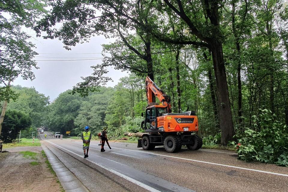 Bomenkap gewestweg Bree-Peer in Ellikom.