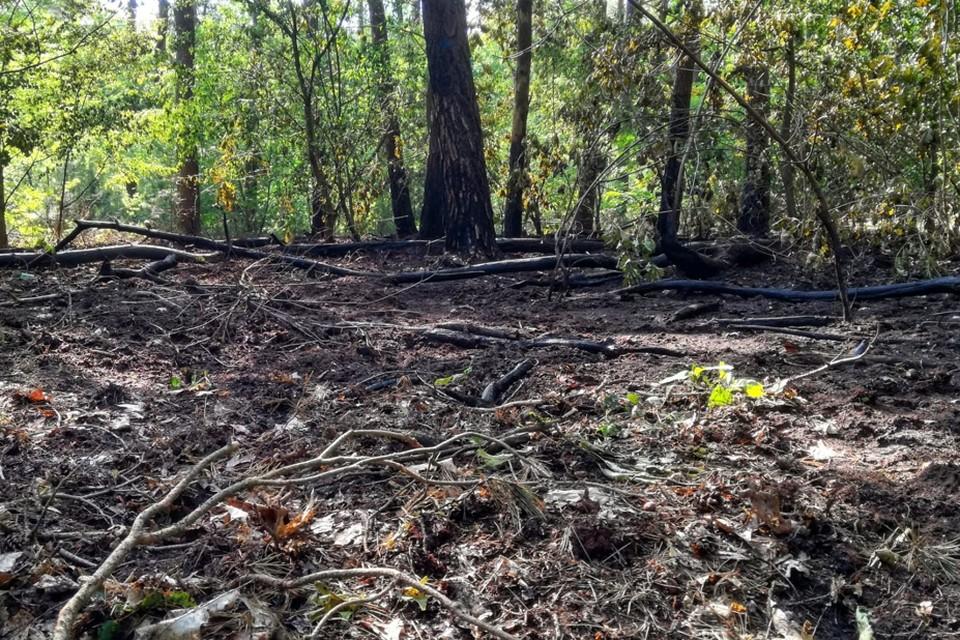 Vorige week maandag brandde nog 300 m² bos af. Alles wijst op brandstichting.
