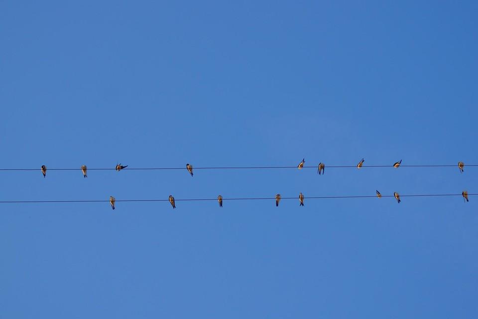 Spaans energiebedrijf voor rechter na elektrocutie honderden vogels (themabeeld)