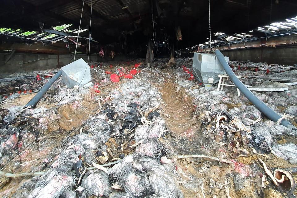 De verwoestende brand doodde ook 18.000 kippen