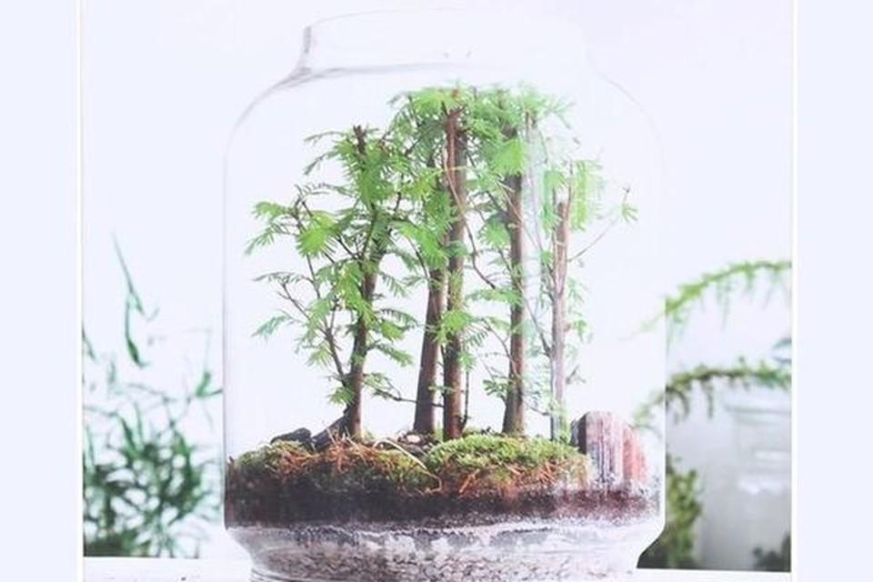 Boek over groen in glas - Lannoo - 21,99 euro