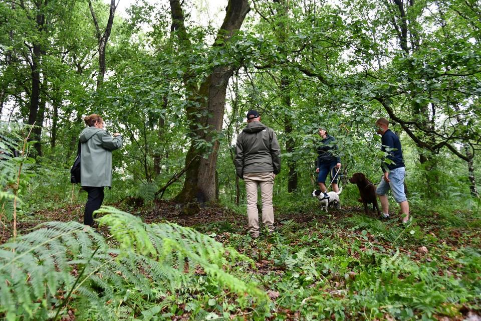 Bij deze boom werd het lichaam van Jürgen Conings gevonden. De plek stond vol varens, maar die zijn door de speurders weggehaald voor het onderzoek.