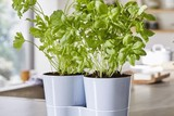 thumbnail: Kruidenpot voor twee plantjes - Mepal - 14,99 euro