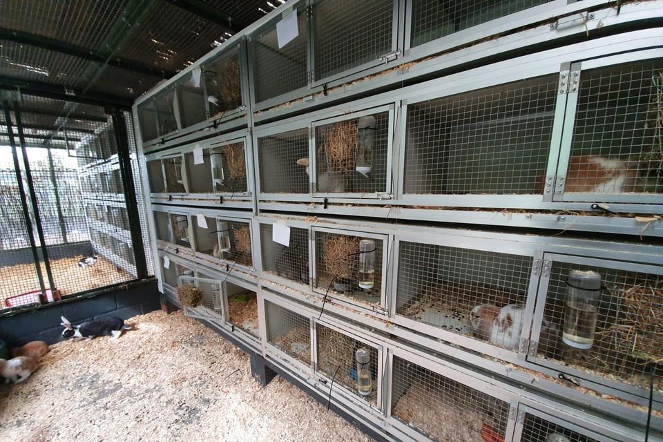 Vorig jaar kocht het opvangcentrum nog voor 10.000 euro aan extra konijnenkooien, intussen zitten ze allemaal vol.