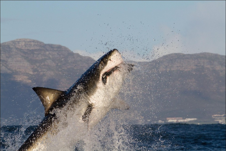 Het wondere beeld dat de Kaapstadse toerist normaal te zien kreeg.