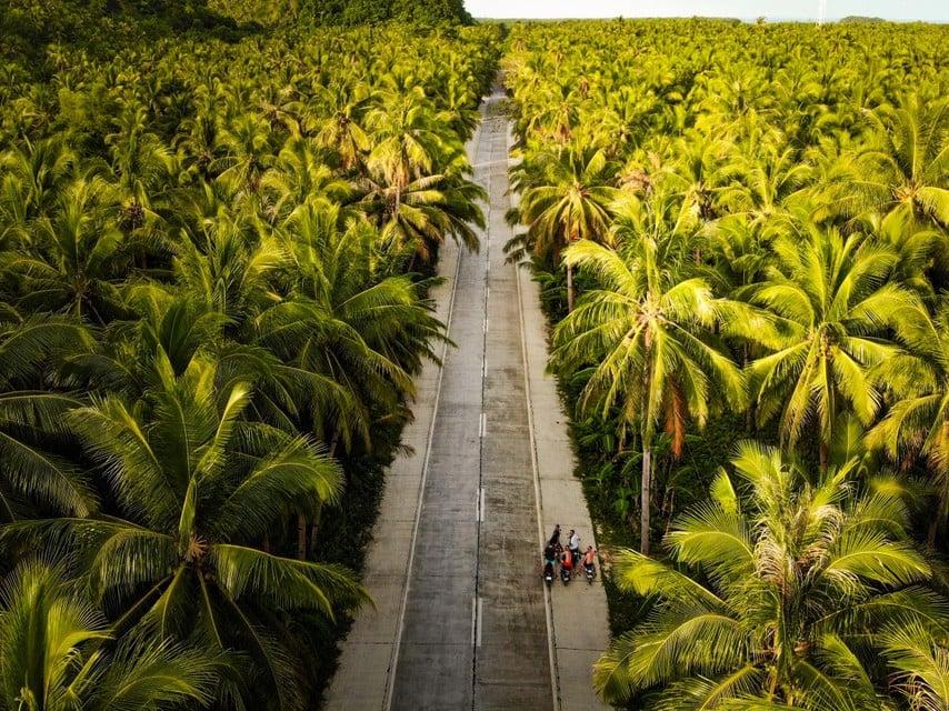 Jalan Pohon Palem di pulau itu.