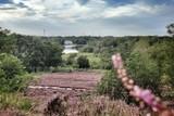 thumbnail: De purperen hei en het kasteel van Terlaemen, Heusden-Zolder.