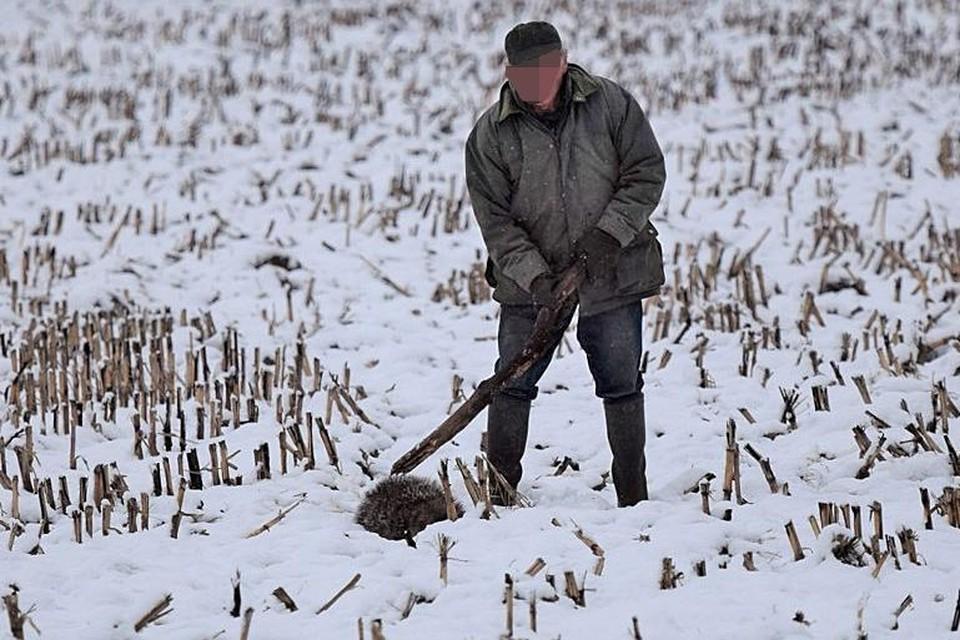 Wandelaar Guido Menten kon de zware dierenmishandeling vastleggen op foto.