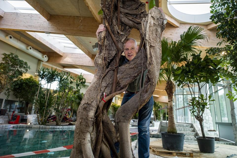Jean bij de 145 jaar oude Bengaalse vijgenboom, die hij redde in Cambodja.