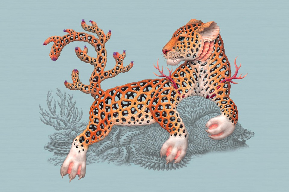 Coralleopardus of de koraalpanter