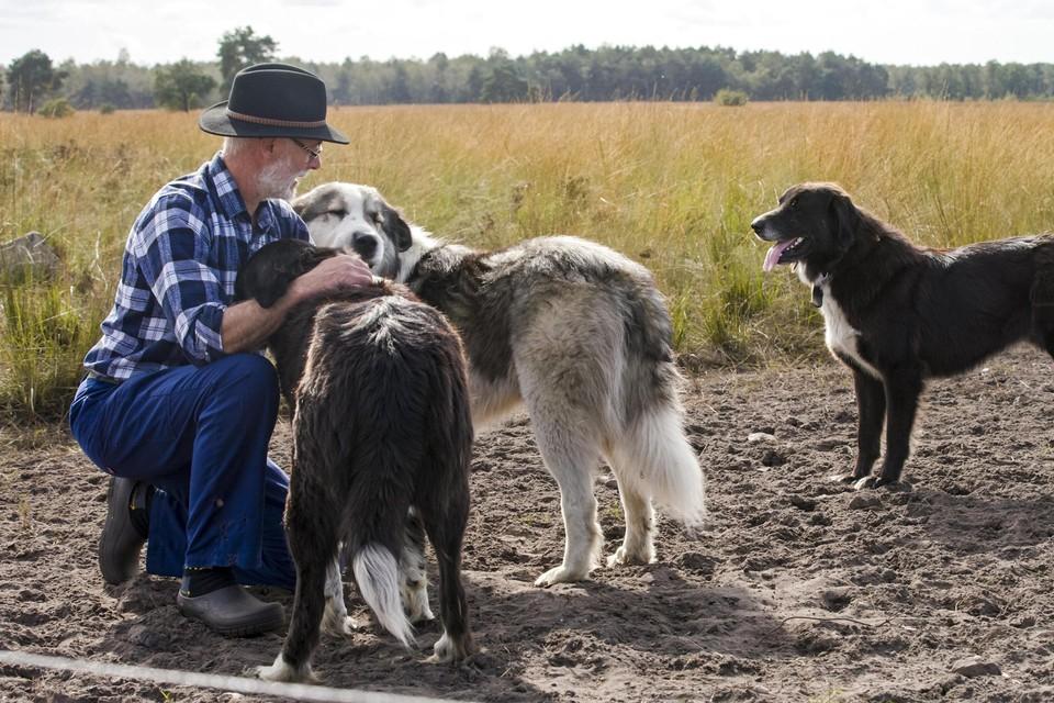 Herder Johan Schouteden bij zijn nieuwe waakhonden.