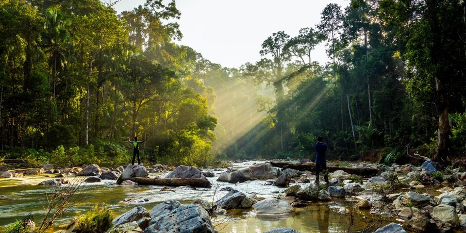 Matahari terbit fotosintesis di antara pepohonan.