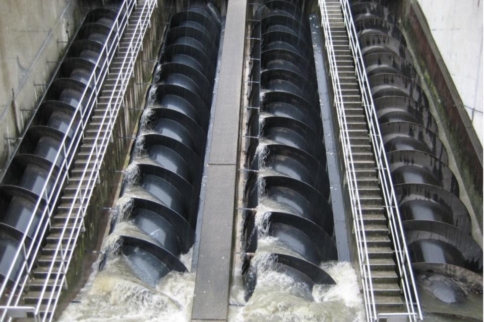 Heel wat vissen die in de schroeven van de waterkrachtcentrale terechtkomen, overleven de passage niet.
