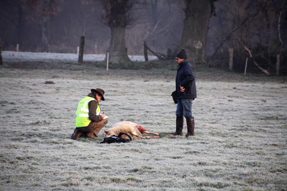 Boswachter Michel Broekmans kwam stalen nemen.